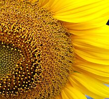 Sunny side up by sunshine0