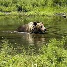 Bear Wash by Paul Gitto