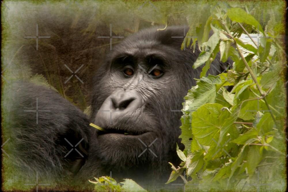 kanyonyi the gorilla by gruntpig