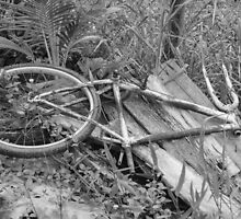 Abandoned Bike by Brent Olson