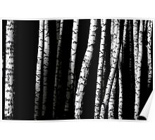 Birch Abstract Poster