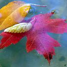 Autumn Leaves by tkrosevear