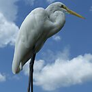 Great Egret by Mark Wilson