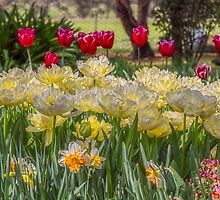 Springtime at the Tulip Farm by Elaine Teague