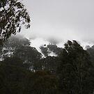 Head in the Clouds - Mt Buller by oiseau