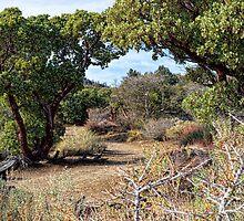 Desert Garden Trail by Glenn McCarthy