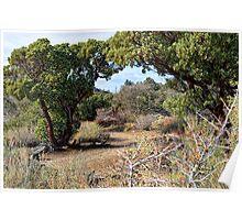 Desert Garden Trail Poster