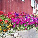 the barn by yellowpony