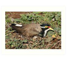 nesting plover Art Print