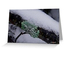 photoj Macro Flora Greeting Card