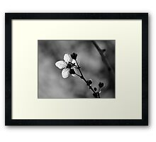 Blossom in Black & White Framed Print