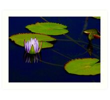 Reflected Water Lily Bud Art Print