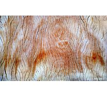 wooden structure  Photographic Print