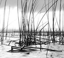 reeds by justinGC