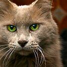 Feline Intensity by Sue  Cullumber