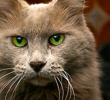 Feline Intensity by Sue  Cullumber