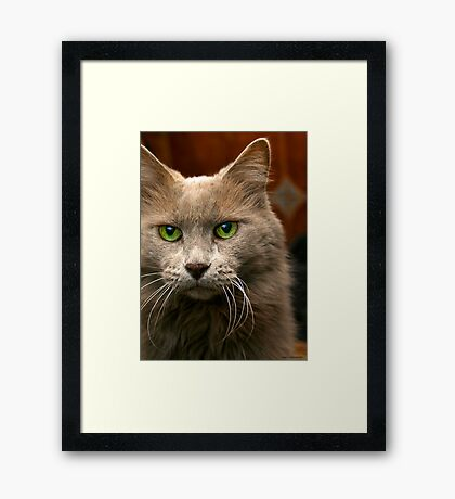 Feline Intensity Framed Print