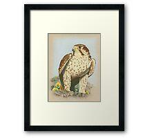 Prairie Falcon Framed Print