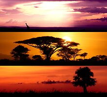 From Africa, With Love by carlacarlacarla