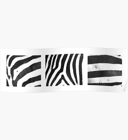 Zebra Stripes x 3 Poster