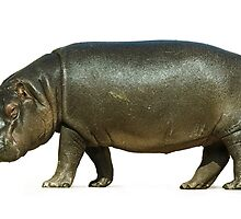 figure of a young hippo. Isolation on white background by Sergieiev