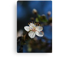 Sakura - 桜 Canvas Print