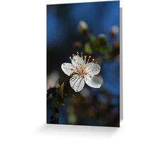 Sakura - 桜 Greeting Card