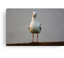 Stand to attention !  Canvas Print