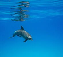 A Privilege ~ Dolphin Encounter  by Karen Willshaw
