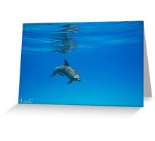 A Privilege ~ Dolphin Encounter  Greeting Card