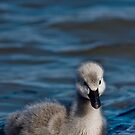 Baby Swan by Mary Broome