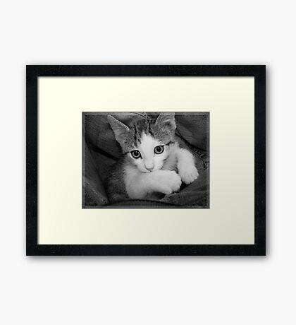 Playing Framed Print