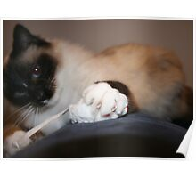 Cat N Mouse II Poster