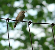 Bird on a wire by Wabacreek Photography