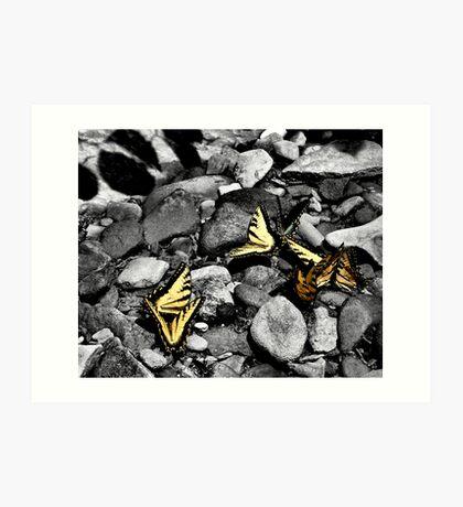 Stone butterflies 2 Art Print