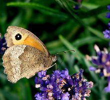 short rest for a little butterfly by Alison Johnson