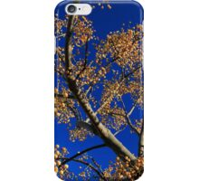 Fruit of the White Cedar Tree iPhone Case/Skin