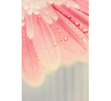 baby pink Photographic Print
