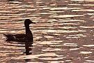 Duck on Golden Lake by Jo Nijenhuis