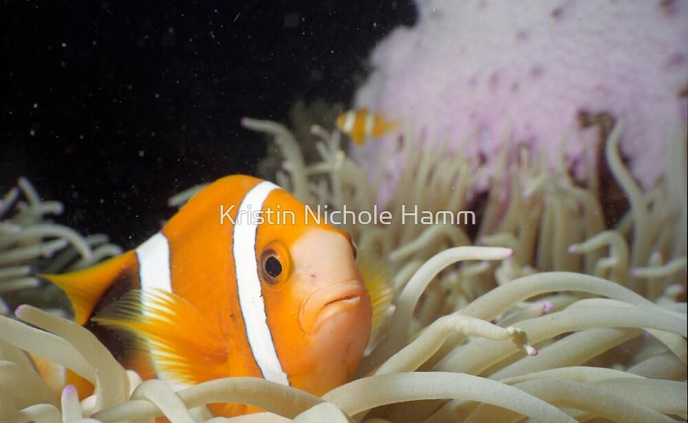 Clownfish Macro by Kristin Hamm