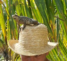 Lizard Hat  by Carole Boudreau