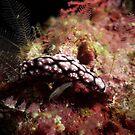 Nudibranch by Kristin Nichole Hamm