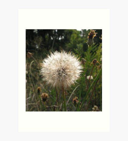 Delicate weed Art Print