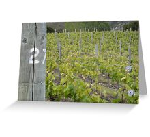 NZ Vineyard Greeting Card