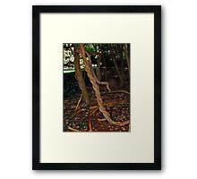 old twisted vines inside Empire Mines Framed Print