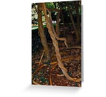 old twisted vines inside Empire Mines Greeting Card