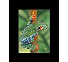 Frog #3 Photographic Print
