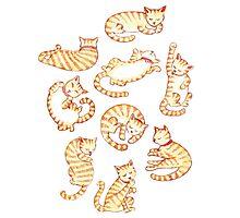Orange Tabby Cats Photographic Print