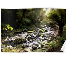 River in the Catlans Rainforest, South Island, New Zealand Poster