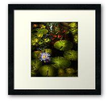 The koi pond Framed Print